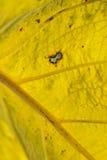 Feuille jaune Photographie stock