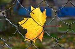 Feuille jaune Image libre de droits