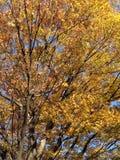 Feuille jaune Photo libre de droits