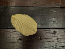 Feuille jaune Photo stock