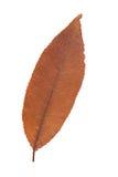 Feuille jaune comme symbole d'automne Image stock