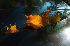 Feuille jaune d'automne Photos stock
