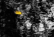 Feuille jaune d'automne photo stock