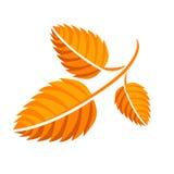 Feuille jaune d'automne Photographie stock libre de droits