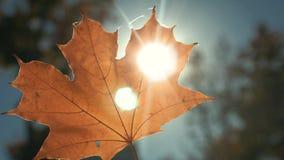 Feuille jaune d'automne au soleil banque de vidéos
