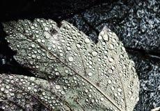 Feuille jaune d'automne dans les baisses de l'humidité photo stock