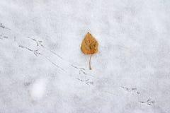 Feuille jaune d'automne près des voies d'oiseau sur une neige fraîche photo libre de droits