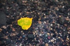 Feuille jaune d'automne sur l'eau Image libre de droits
