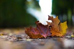 Feuille jaune d'automne sur la route Images libres de droits
