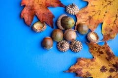 Feuille jaune d'automne sur le fond bleu photos stock