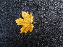 Feuille jaune d'automne sur le fond noir d'asphalte Photo libre de droits