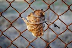 Feuille jaune d'automne sur le fond d'une grille Images stock