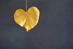 Feuille jaune d'un arbre sous forme de coeur sur un backgro noir Photos libres de droits