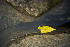 Feuille jaune de flottement Photos stock
