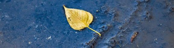 Feuille jaune de flottement Image libre de droits