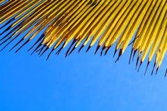 Feuille jaune de noix de coco avec le ciel bleu photographie stock libre de droits