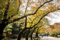Feuille jaune des érables en automne au parc d'Ueno image libre de droits
