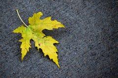 Feuille jaune et verte Photographie stock libre de droits