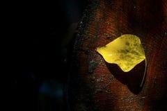 Feuille jaune isolée Photo libre de droits