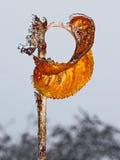 Feuille jaune isolée avec le givre Image libre de droits