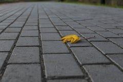 Feuille jaune isolée sur un trottoir gris photographie stock