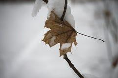 Feuille jaune sous la neige Photographie stock