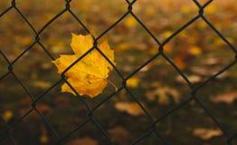 Feuille jaune sur la grille Photo stock