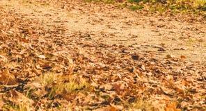 Feuille morte en automne sur un chemin de terre Photographie stock