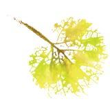 Feuille naturelle d'aquarelle Logo d'Eco, travail créatif Objet d'isolement sur un fond blanc Photos libres de droits