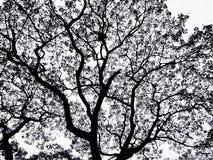 Feuille noire et blanche d'arbre Image stock
