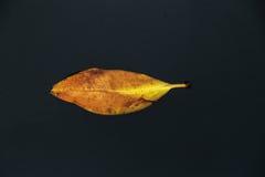 Feuille orange flottant sur l'eau Image libre de droits