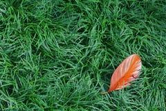 Feuille orange tombée sur l'herbe verte Images stock