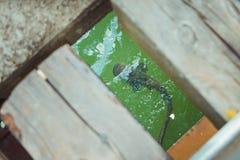 Feuille-poissons dans la zone d'exclusion de Chornobyl Zone radioactive dans la ville de Pripyat - ville fantôme abandonnée Histo photographie stock