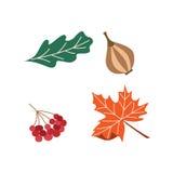 Feuille réglée d'arbre de canneberge d'oignon de vecteur de thanksgiving illustration stock