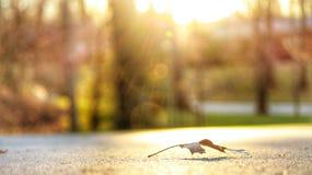 Feuille rêveuse Photo libre de droits
