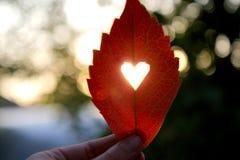Feuille rouge d'automne avec le coeur coupé dans une main Photos stock