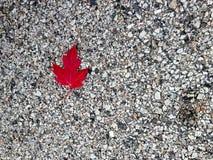 Feuille rouge dynamique d'automne contre la route Photographie stock