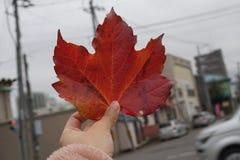 Feuille rouge en automne chez le Japon photo libre de droits