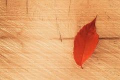 Feuille rouge solitaire sur le fond en bois, texture de peinture d'automne photos stock