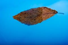 Feuille sèche de couleur d'or placée dans l'eau bleue Photos libres de droits
