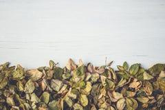 Feuille sèche de fleur rose sur la plate-forme en bois blanche avec l'espace vide FO Photo libre de droits