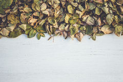 Feuille sèche de fleur rose sur la plate-forme en bois blanche avec l'espace vide FO Image stock