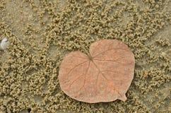 Feuille sèche de foyer avec le sable de crabe sur la plage Photo libre de droits