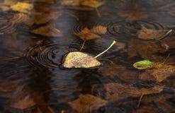 Feuille sèche jaune sur l'eau Images libres de droits