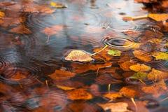 Feuille sèche jaune sur l'eau Image stock