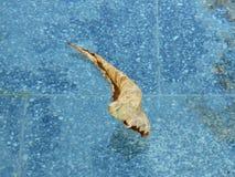Feuille sèche ocre kaki flottant dans l'eau Fond pour une carte d'invitation ou une félicitation image stock