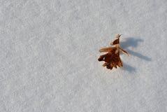 Feuille sèche orange de chêne sur la neige blanche Photo stock