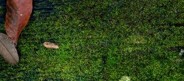 Feuille sèche sur la couverture en bois de planche avec de la mousse photos stock