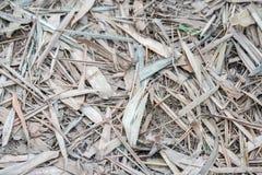 Feuille sèche sur le fond et les textures de plancher Photo stock
