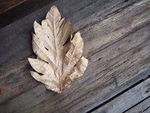 Feuille sèche sur le plancher en bois Photos stock